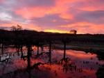 sunrisevines