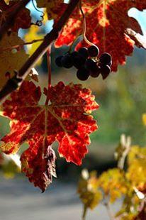 WineCountry1
