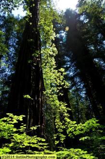 Woods1